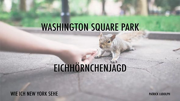 14 Eichhörnchenjagd im Washington Square Park.mp4